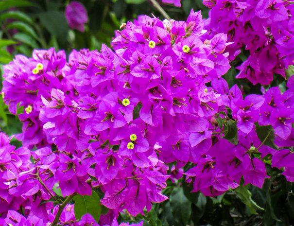 flowers-3520593_1920